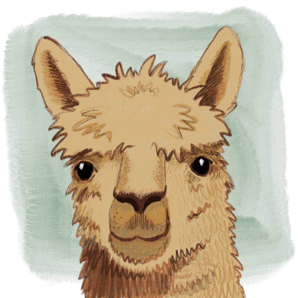 sarah chand digitale illustration Lieblingstier Lama