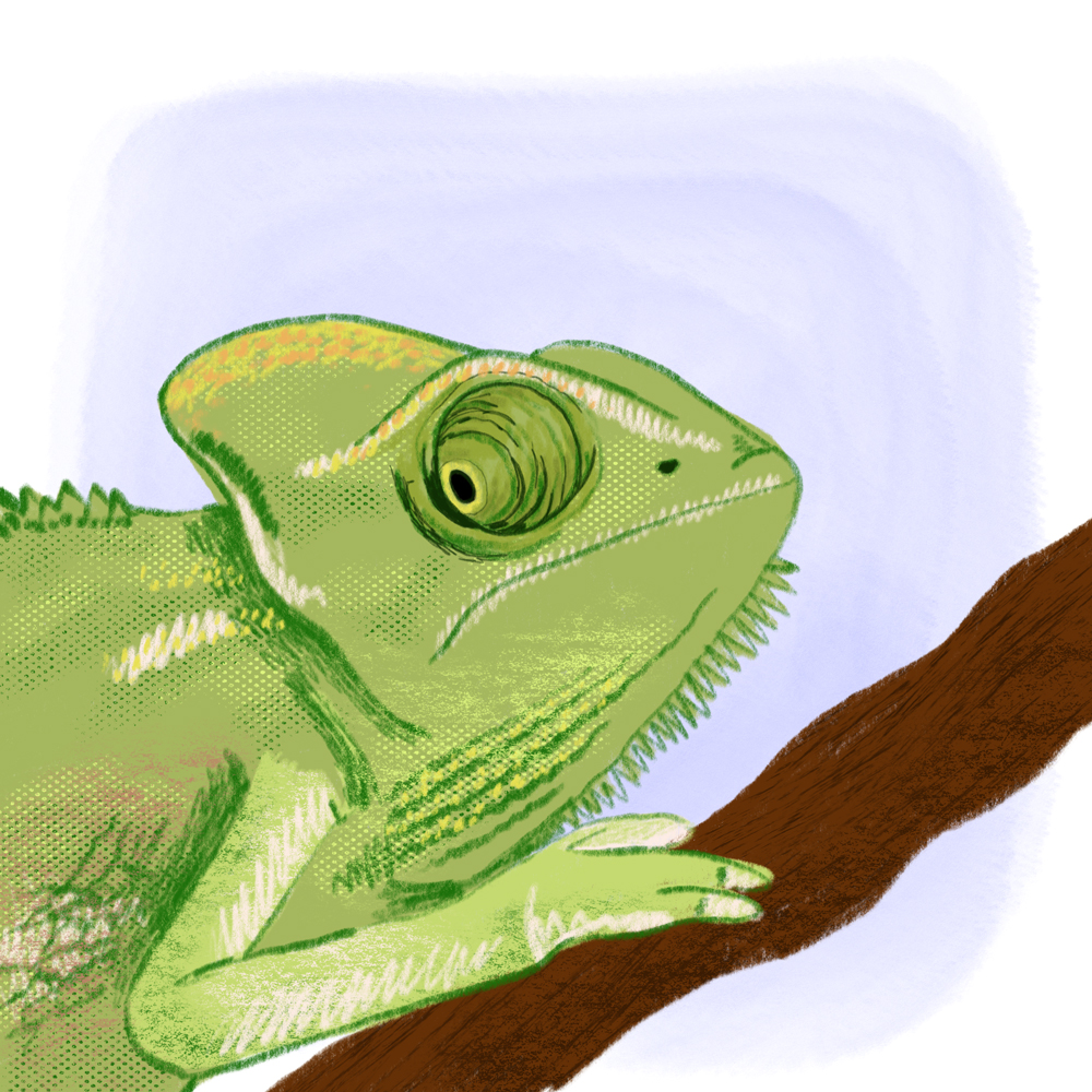 sarah chand digitale illustration Lieblingstier Chameleon