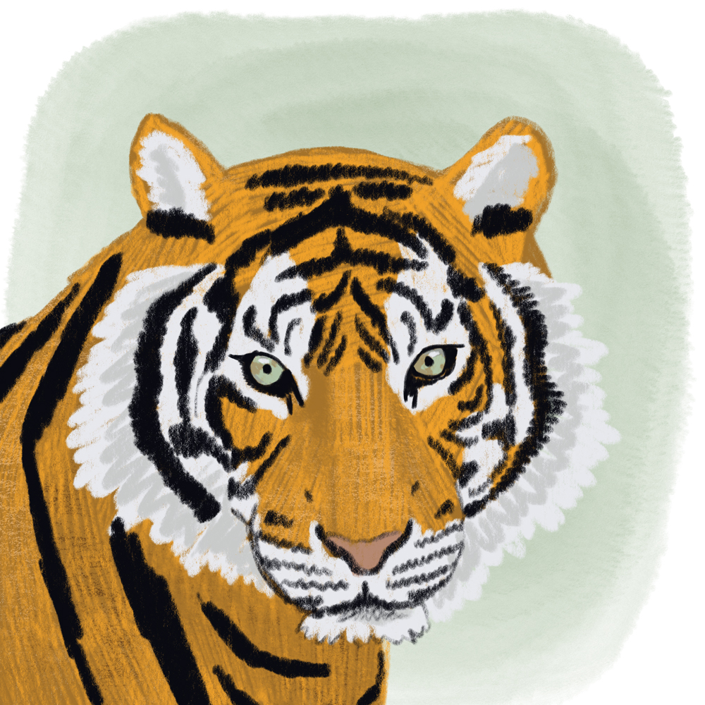 sarah chand digitale illustration Lieblingstier Tiger