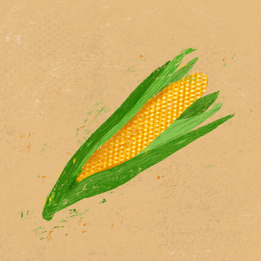 sarah chand food illustration mais (digitale illustration)