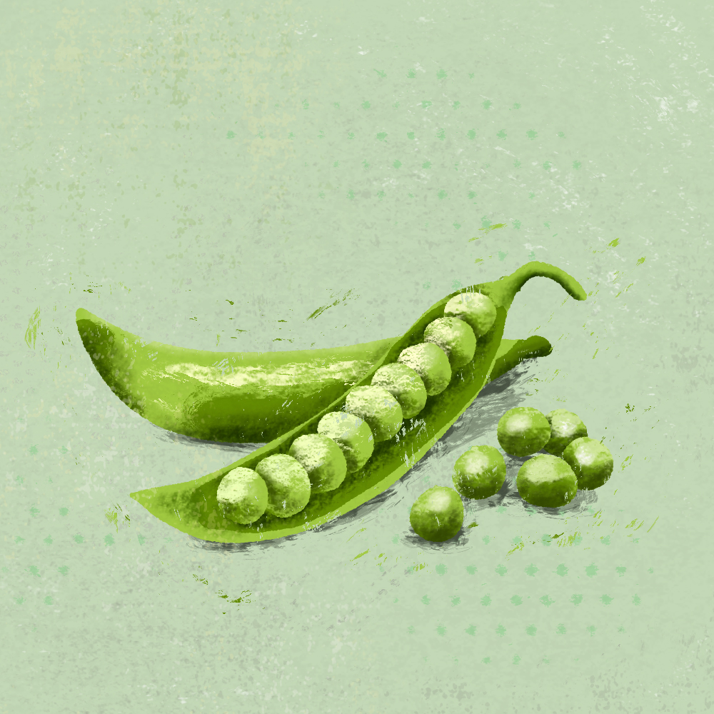 sarah chand food illustration zuckererbsen erbsen (digitale illustration)