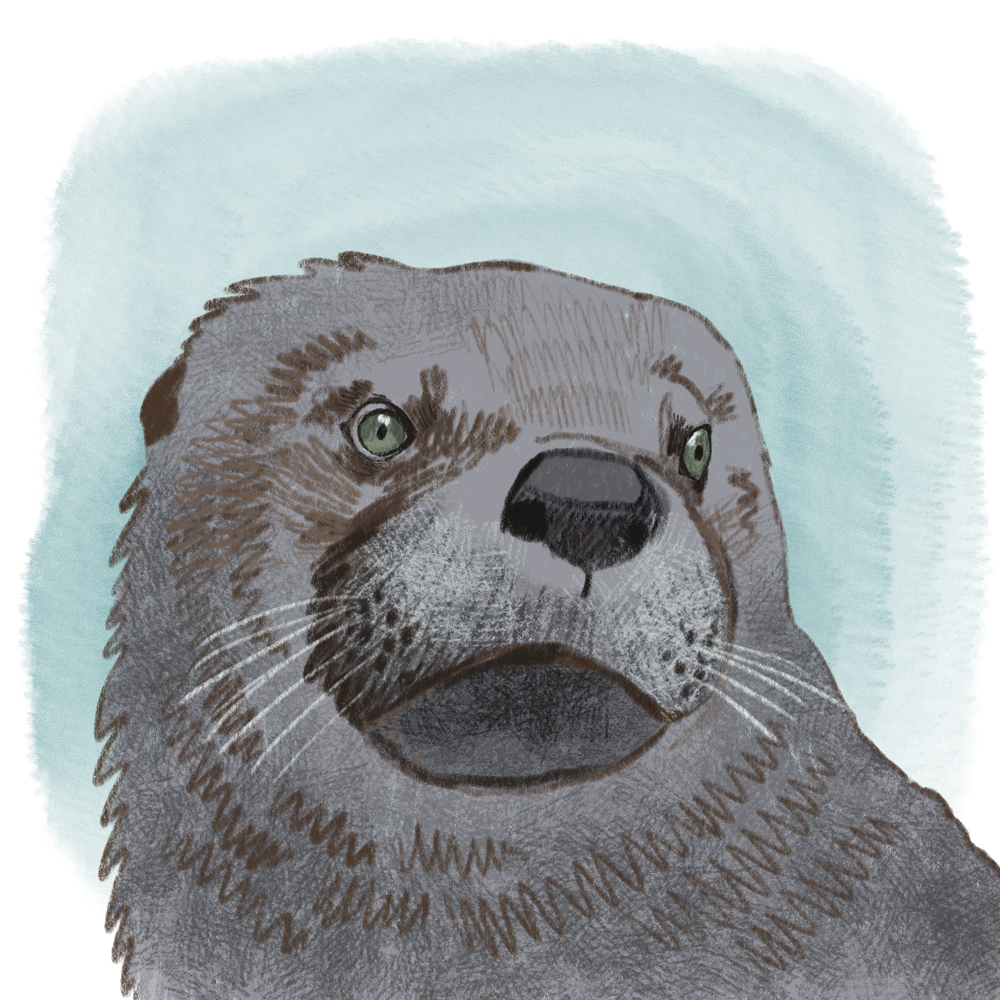 sarah chand digitale illustration Lieblingstier Otter