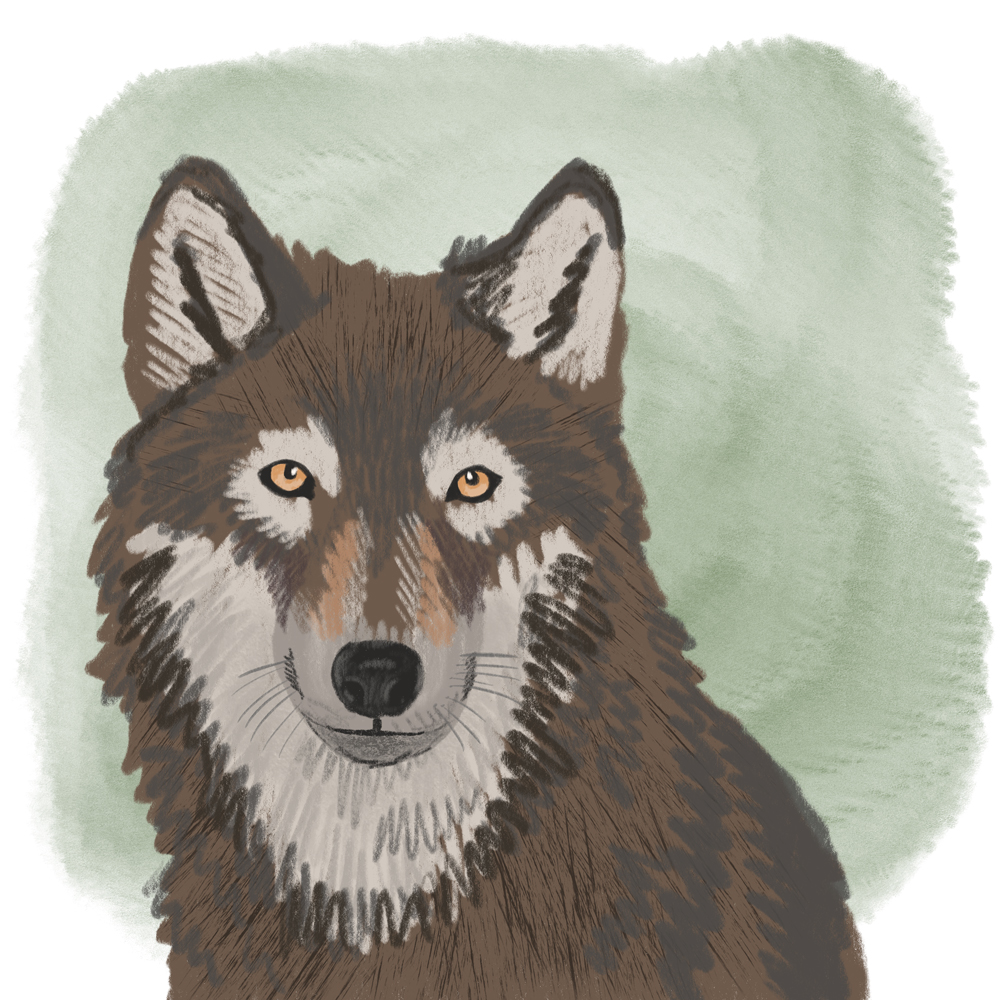 sarah chand digitale illustration Lieblingstier Wolf