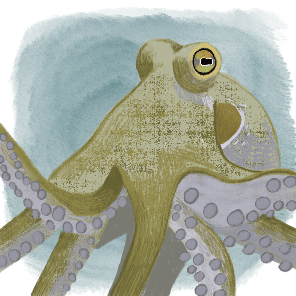 sarah chand digitale illustration Lieblingstier Oktopus