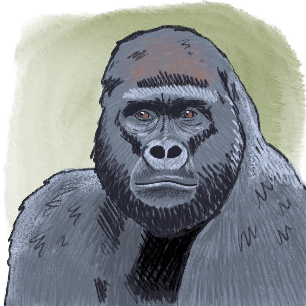 sarah chand digitale illustration Lieblingstier Gorilla